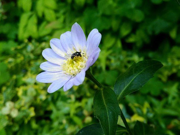 夫婦円満 紫の花