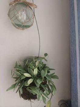 珪藻土 シックハウス対策