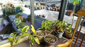 サンルーム 植物
