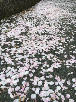 花びらじゅうたん